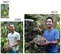 Turtlethursday African Spurred Tortoises Animal