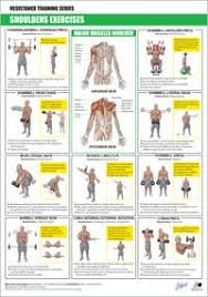 Printable Muscle Building Workout Chart Google Search