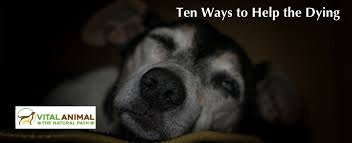 your dying animal 10 ways to help
