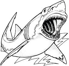 great white shark jaws coloring page printable great white shark jaws coloring great pin by on sketchbook ideas great white shark coloring