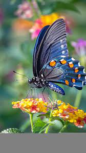 Butterfly Phone Wallpapers - Top Free ...