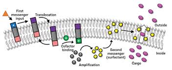 Gpcr Signaling Synthetic Receptors Imitate Gpcrs September 25 2017 Issue