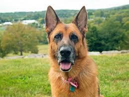 Znalezione obrazy dla zapytania dog