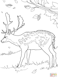 Small Picture Fallow Deer coloring page Free Printable Coloring Pages