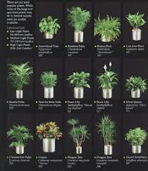 interior office plants. indoor plants for an office interior s