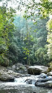 Jungle, trees, creek, rocks 828x1792 ...