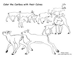 Small Picture Caribou with their Calves Coloring Page