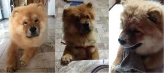 re wanting whats best for my new chow