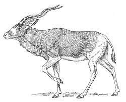 Small Picture Coloring page Antelope img 15698
