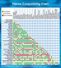 Saltwater Fish Compatibility Chart Marine Animal Compatibility Chart