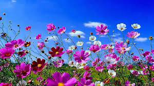 HD Flowers Computer Wallpapers ...