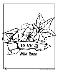 Small Picture Coloring Pages Of State Flowers Coloring Pages