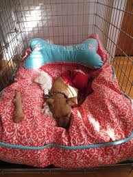 tj maxx dog beds. Modren Maxx Doggy Bed And Matching Pillow From TJ Maxx LIL Nigga LaToshia Chaney Intended Tj Dog Beds Pinterest