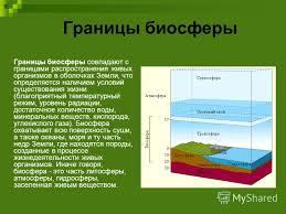 Презентация на тему Учение В И Вернадского о биосфере  11 Границы биосферы
