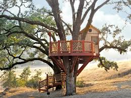 kids tree house for sale. Barbara Butler-Extraordinary Play Structures For Kids-Coyote Valley Treehouse: Coyote Treehouse Kids Tree House Sale