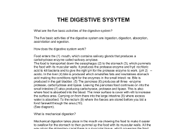 the digestive system a level science marked by teachers com document image preview