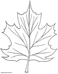 Small Picture Maple Leaf Coloring Page KinderArt