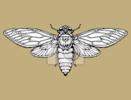 Fototapeta Beetle Jelen Rohatý Beetle Velký Hmyz Soubor Art Linky