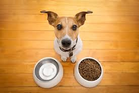 Did You Feed The Dog Chart Dog Feeding Schedule How Many Times A Day Should I Feed My Dog