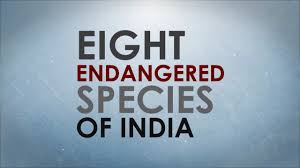 eight endangered species of