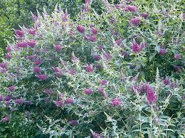 """Résultat de recherche d'images pour """"arbre aux papillons"""""""