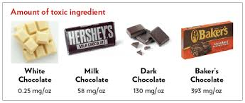 How Much Chocolate Is Toxic For Dogs Less Than Youd Think