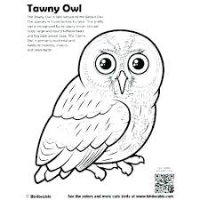 Cute Owl Pictures To Color Owl Coloring Page Printable Barn Owl