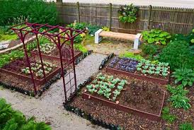 Small Picture Best Of Kitchen Garden Design India Kitchen Garden Design Shade