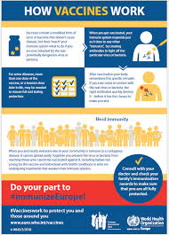 Some of the experimental coronavirus vaccines use some very new technology, including software that reprograms cells. Who Europe European Immunization Week 2020 Infographic How Vaccines Work 2018