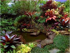 Small Picture Tropical Yard Ideas how to garden australia tropical plants