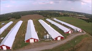 Poultry Farm Design 9 Rules For Starting Your Own Poultry Farm