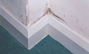 Damp Wall In Home