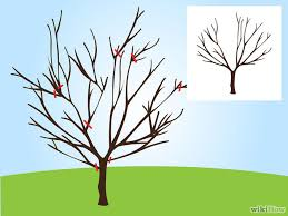 How To Prune Your Fruit Trees  Modern FarmerCherry Fruit Tree Care