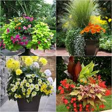 Small Picture 3106 best Container gardening images on Pinterest Gardening