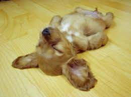Image result for sleeping dog images