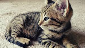 cute photogenic kitten