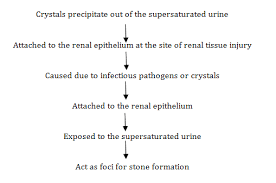 Nephrolithiasis An Updated Review In Relation To Diagnosis