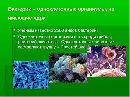 Диплом курсовая реферат Одноклеточные организмы как наиболее  Реферат по одноклеточным организмам