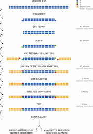 Illumina Sequencing Flow Chart Nextflex Bisulfite Seq Kit For Illumina Sequencing Order