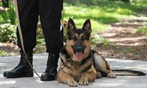 Image result for police narcotics team with sniffer dog