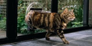 installing a dog door in glass doors cat pet