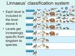 Vertebrate Taxonomy Chart Google Search Animal