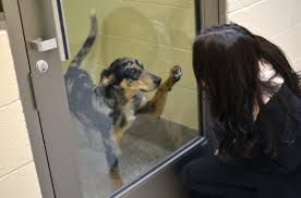 Michigan Humane Society: Animal Shelters - Adopt A Pet