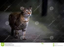 Alley Cat Designs Alley Cat Stock Photo 64058352 Megapixl