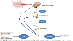 Significance Of Hypothalamic Pituitary Adrenal Axis To Adapt To