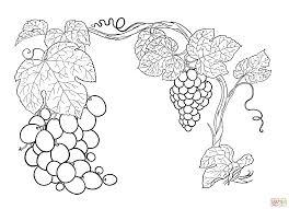 Coloriage Raisins Sur La Vigne Coloriages Imprimer Gratuits