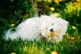 Types Of Allergic Reactions In Dogs – American Kennel Club