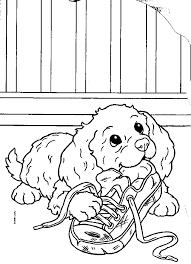 Dagboek Van Een Puppypleeggezin Theorieles Hulphond Nederland Dag 2
