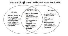 Venn Diagram Comparing Meiosis And Mitosis 7 Best Mitosis Vs Meiosis Images Mitosis Biology Lessons