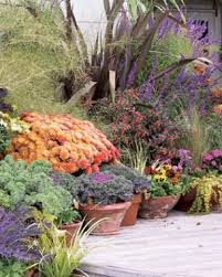 fall garden flowers. Pick Plants That Stand Up To Frost Fall Garden Flowers